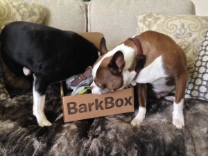 barkbox12