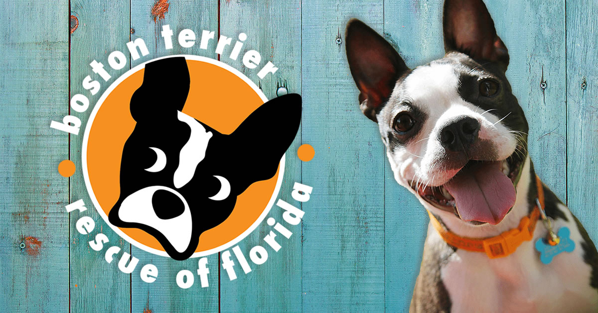 Boston Terrier Rescue of Florida